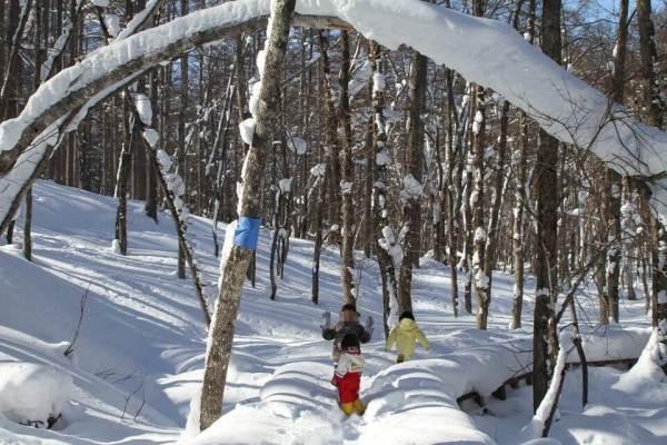 冬の森の写真