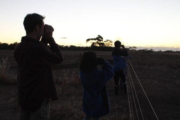 カンガルーを探す写真