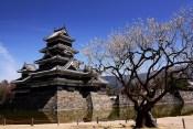 松本城と桜アイキャッチ画像