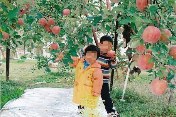 りんご狩りの写真