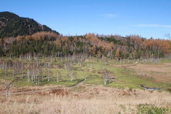 田ノ原湿原の写真