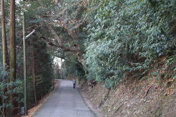 緑に囲まれた参道の写真