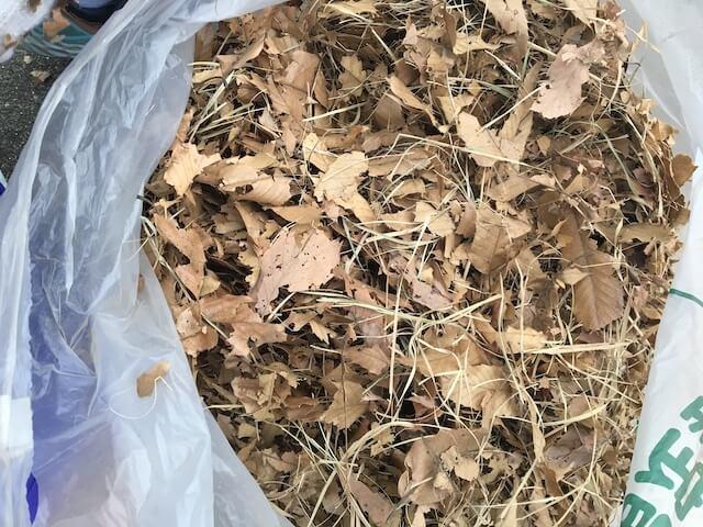 ゴミ袋に入れた落ち葉の写真