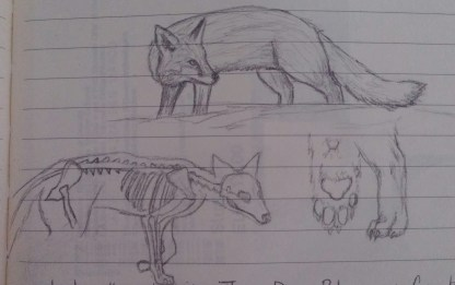 Fox Drawings, Pencil on Paper, 16 March 2016