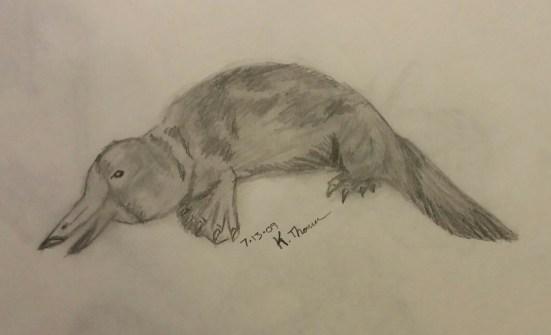 Platypus, Pencil, 13 July 2009