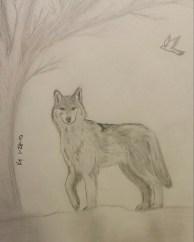 Wolf, Pencil, 28 January 2010