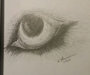 Wolf Eye, Pencil on Paper, 13 November 2013