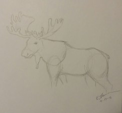 Moose, Pencil on Paper, 13 July 2015