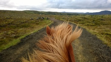 View from the back of an Icelandic Horse