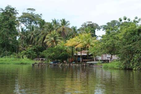 The canals on the way to Tortuguero.
