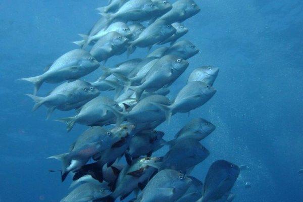Slinders on Antons Dive site