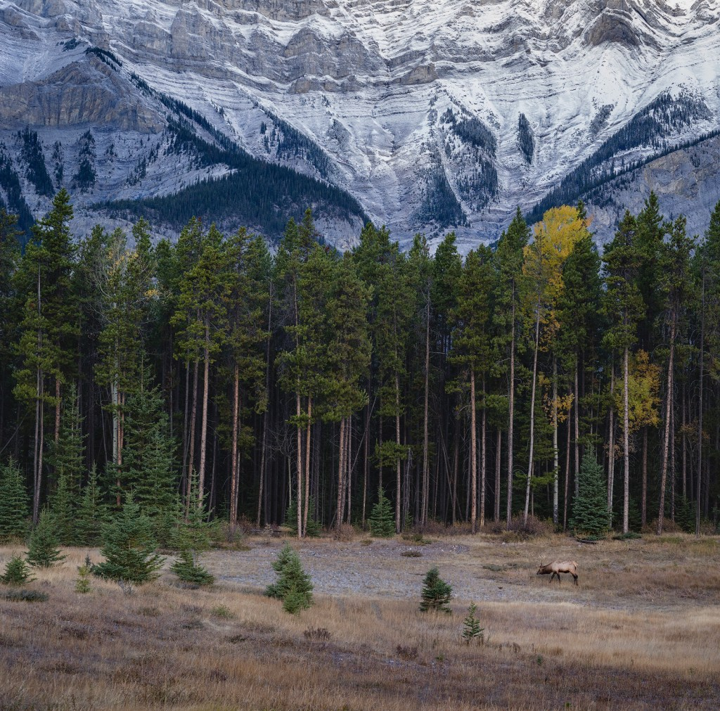 Autumn in the Canadian Rockies, Banff National Park