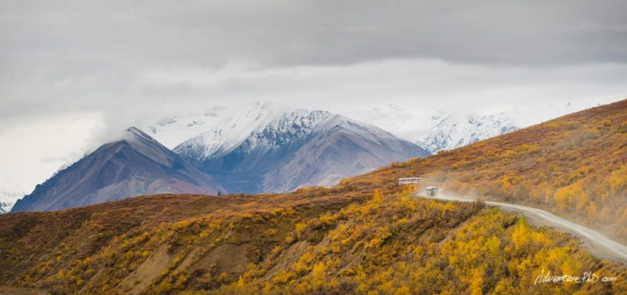 Tourist buses driving on the Park Road into the Denali National Park, Alaska, USA