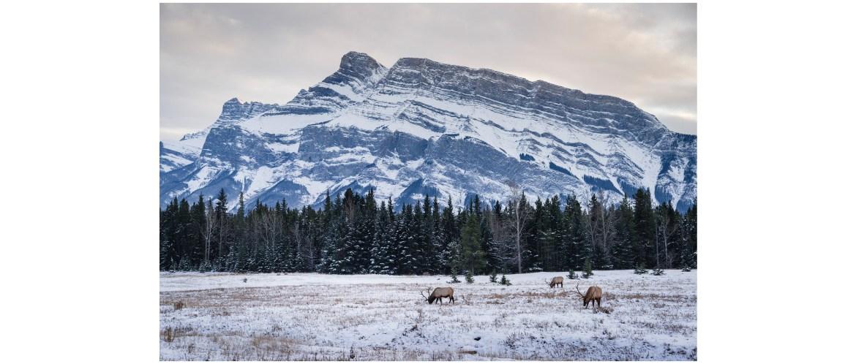 Banff National Park winter landscape near the Two Jack Lake