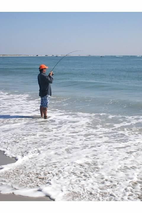 Fighting bluefish in the surf