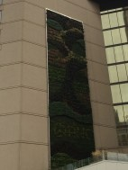This is cool. A green wall of plants on a hotel near the aquarium. Photo by Amy Copeland.
