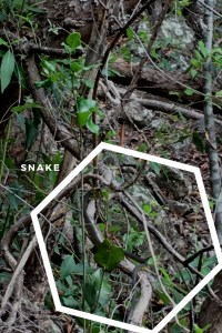 Snake at Passage Peak