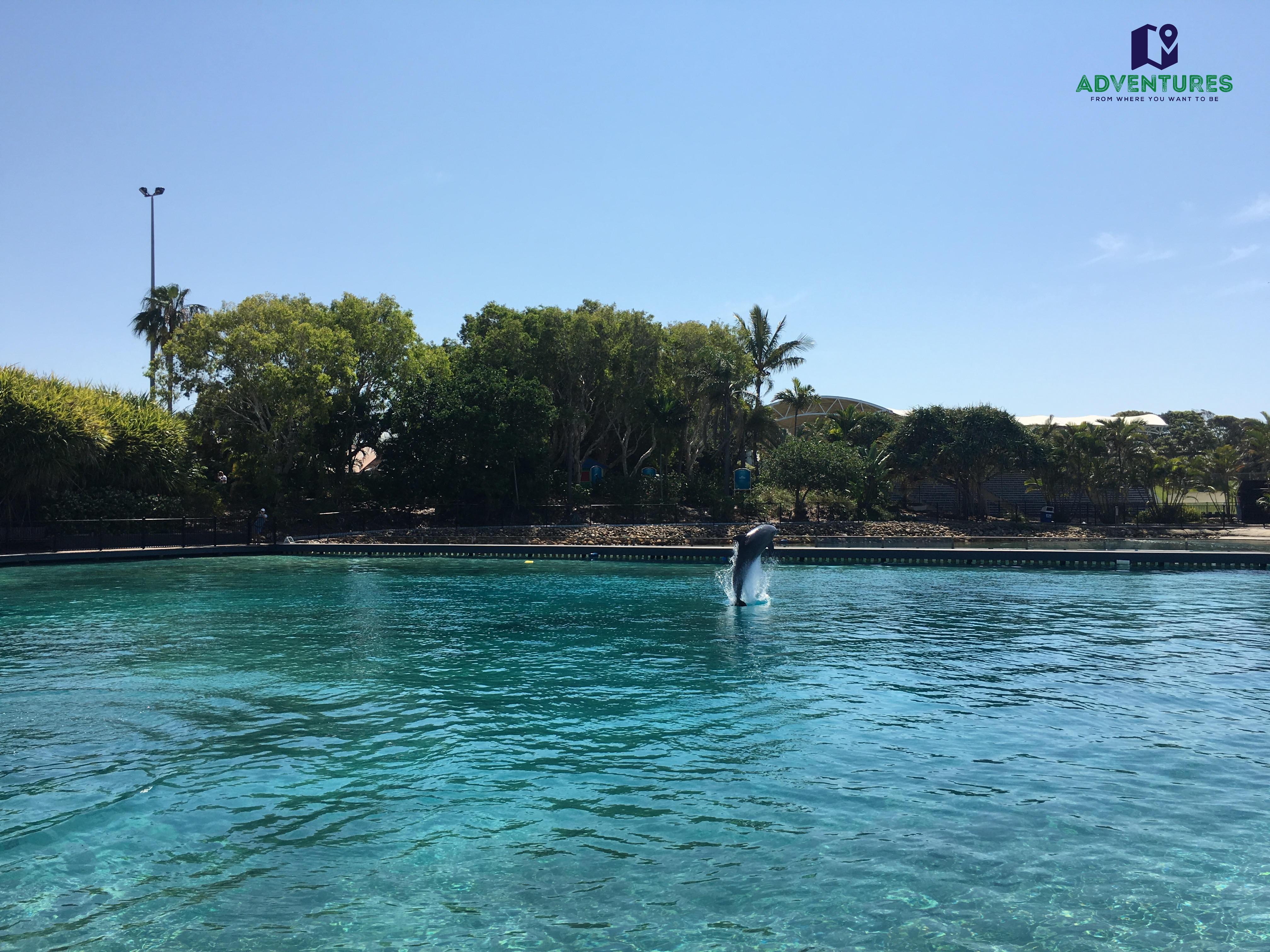dolphin7