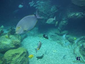 Rainbow Reef - Disney Aulani Resort