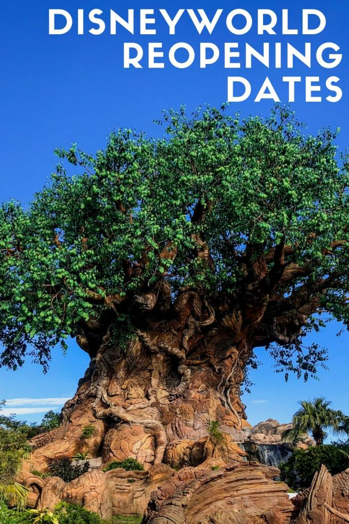 With the news coming that restrictions are beginning to lift in parts of America, Disney has announced their proposed phased reopening dates for Walt Disney World in Orlando Florida, as well As the original California Park.