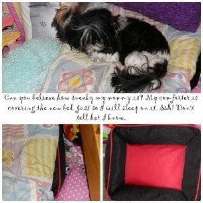 Allie comforter
