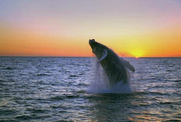 My Top 9 Reasons to Visit Iceland from North Carolina Lifestyle Blogger Adventures of Frugal Mom whale watching
