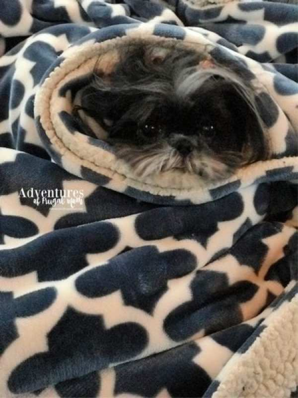 How to Make Your Dog Instagram Famous from North Carolina Lifestyle Blogger Adventures of Frugal Mom