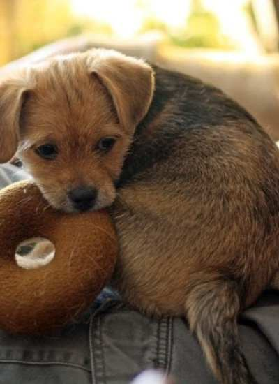 The Top 3 Things To Consider When Buying Interactive Dog Toys