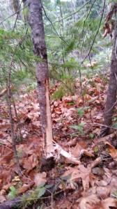 Andy's bushcraft guardrail