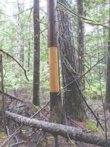 Cedar basket tree