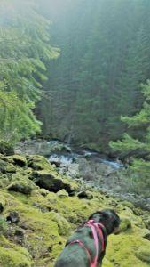 Overlooking Lava Creek