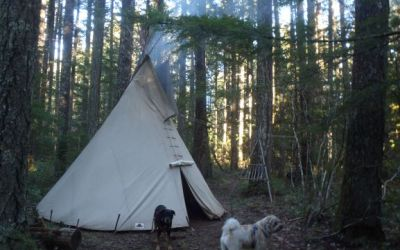 New Years Solo Camp with Dogs