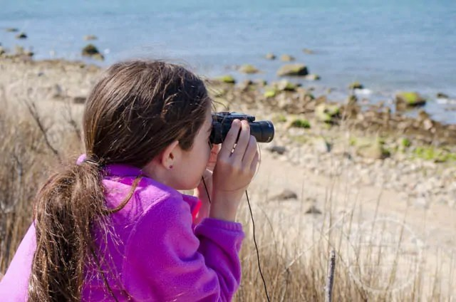 Bella uses binoculars to watch the seals at Montauk Point Seal Haulout