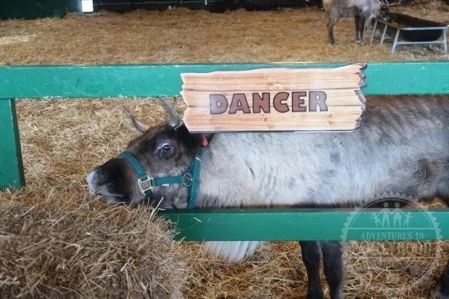Dancer in Santa's Reindeer Stable at Hersheypark