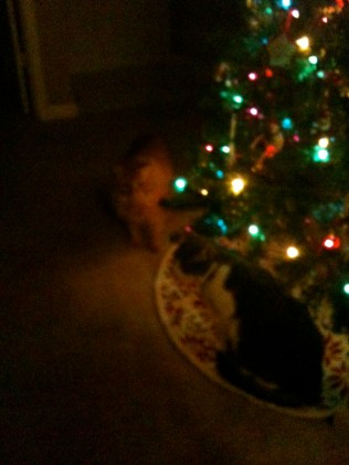 Shiya and WG stalking the Christmas tree