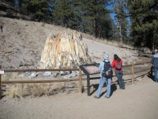 Fossilized tree stump at Florissant Fossil Beds, CO