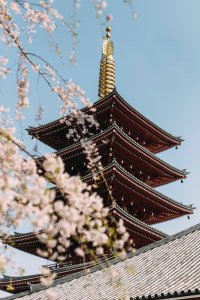 Japan Zen Temple & Cherry Blossoms