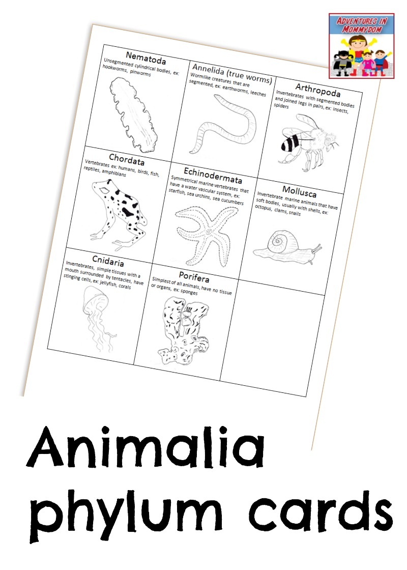 Teach your kids how animals are classified