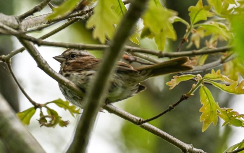 Birding in Rhode Island