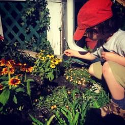preparing the garden