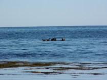 Seal27