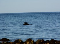 Seal9