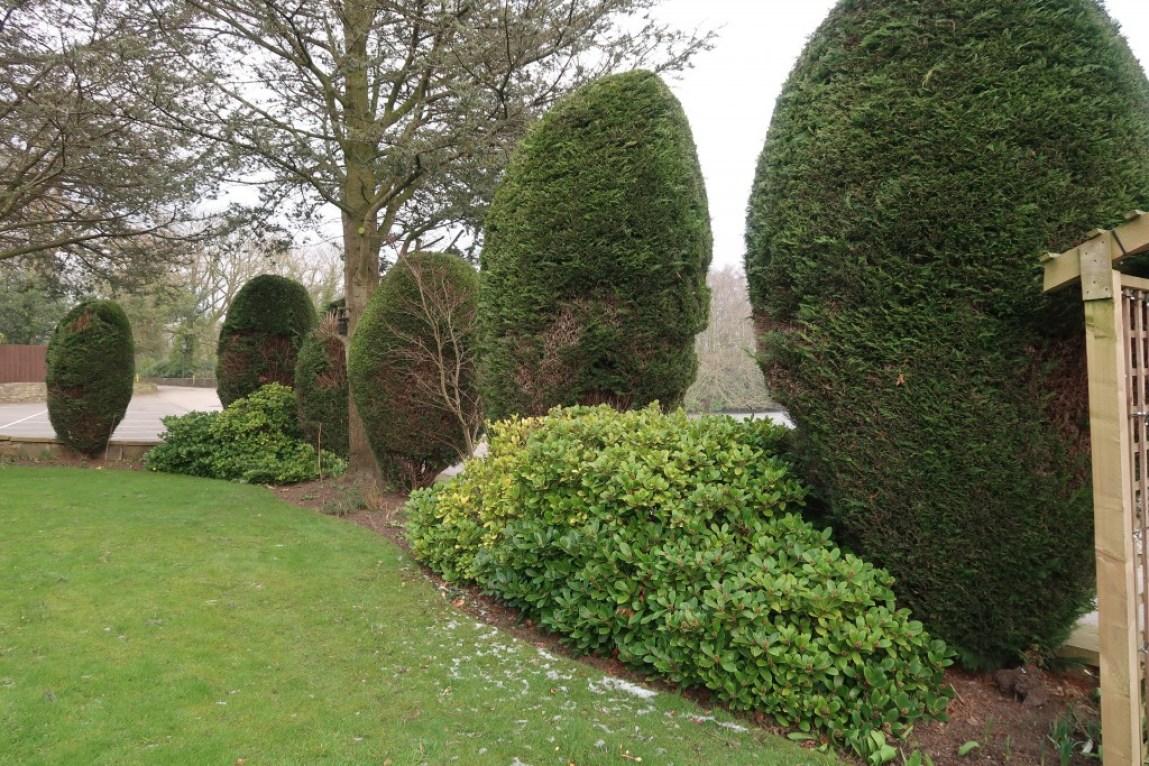 garden at Park Hotel Preston