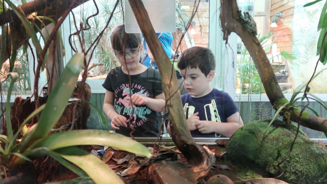 children watching reptiles in vivarium jersey zoo