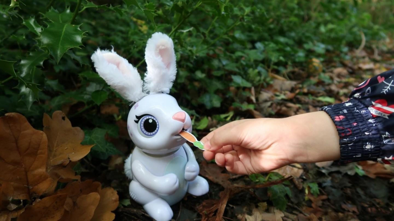feeding zoomer hungry bunny treats