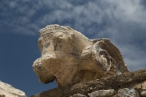 Sheep detail, Ephesus