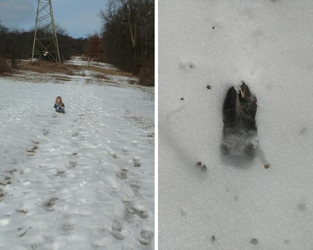 Two sides to mountain. Animal tracks
