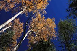 IMG_2243 tree