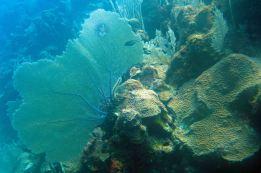 IMG_3742 sea fan
