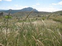 IMG_5805 wheat grass